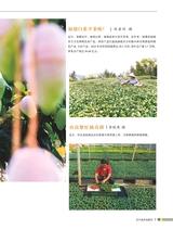 农产品市场周刊2019年3月第6期