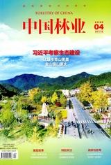 中国林业2020年4月第4期